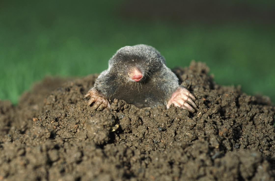 Five steps to help students master mole calculations | Ideas | Education in Chemistry