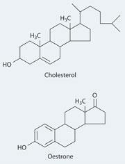 Cholesterol and Oestrone structures
