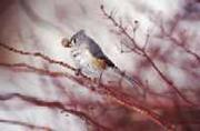 Image - Cotton - bird