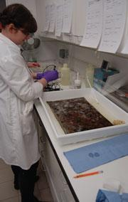 A conservator pH testing the liquid used for cleaning a textile