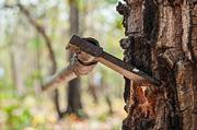 Blade of axe in tree trunk