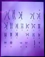 Brown - chromosomes