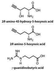 2R-amino-45-hydroxy-5-hexynoic acid, 2R-amino-5-hexynoic acid and γguanidinobutyric acid