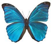 Bright blue butterfly