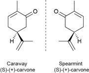Caraway & Spearmint