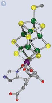 Figure 5 - The Fe7MoS9 metallo-core of the nitrogenase cofactor