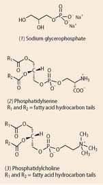 Sodium glycerophosphate, Phosphatidylserine and Phosphatidylcholine chemical structures