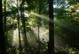 Rays of sunshine from left to right through trees