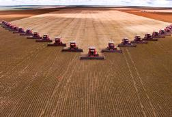 Tractors in a V formation harvesting soybean from a large farm