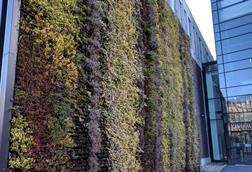 University of Liverpool Central Teaching Hub Living Wall