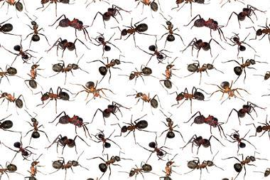 A picture of ants in a repeating pattern against a white background