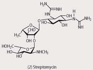 Structure of Streptomycin