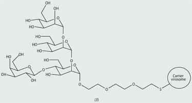branched tetrasaccharide
