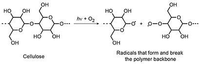 Radicals can form and break the polymer backbone of the cellulose