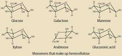 Monomers that make up hemicellulose