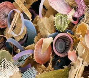 Biomimetric mimicking patterns