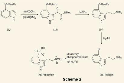 Structures and relations of (12)4-hydroxyl-indole derivative (15)psilocin  (16)psilocybin