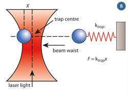 Figure 8 - A diagram showing how optical tweezers can measure forces