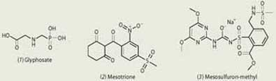 Glyphosate, Mesotrione and Mesosulfuron-methy chemical compounds