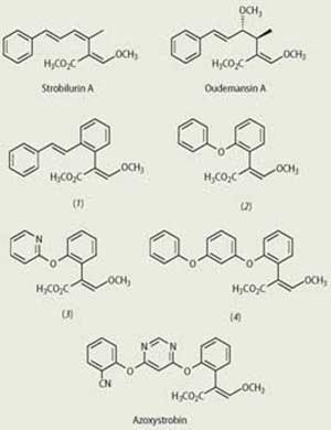 Strobilurin A, Oudemansin A and Azoxystrobin chemical compounds