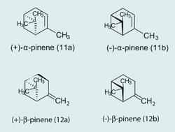 α-pinene and β-pinene