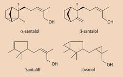 α-santalol, β-santalol, santaliff and javanol structures