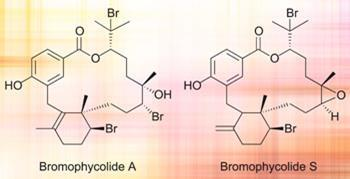Bromophycolide A and S structures