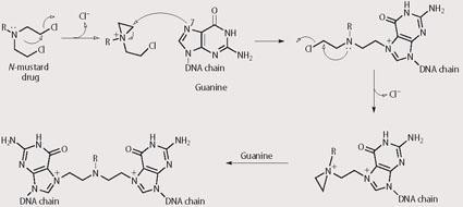 Scheme 1 - DNA crosslink from reaction at N7 on guanine with an N-mustard drug