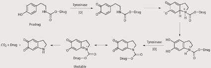 Scheme 3 - Suggested mechanism for release of cytotoxic drug by prodrug series 1