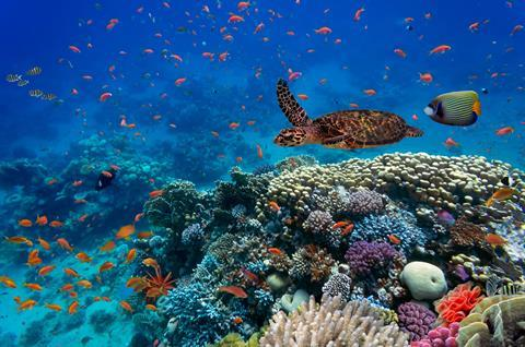 An image showing tropical fish and a turtle next to a coral reef