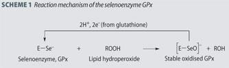 Scheme 1 - Reaction mechanism of the selenoenzyme GPx