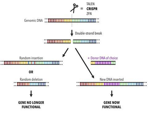 Diagram of the gene editing process