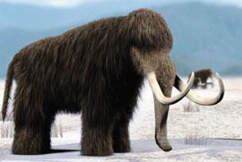 A mammoth
