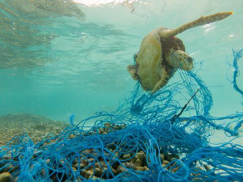 A turtle entangled in a discarded fishing net