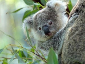 Eucalyptusshutterstock307424420300tb