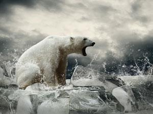 Polar bear and melting ice