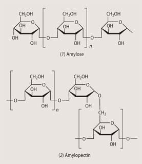 Structures: (1) amylose, (2) amylopectin