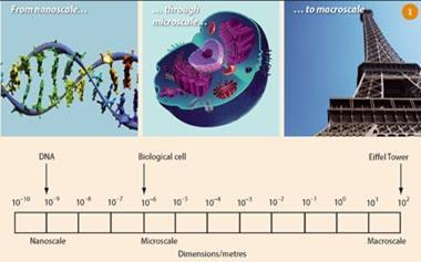 Dimensions of the nanoworld in perspective - DNA are 10-9 on a nanoscale, biological cells are 10-6 on a microscale and the Eiffel Tower is 102 on a macroscale