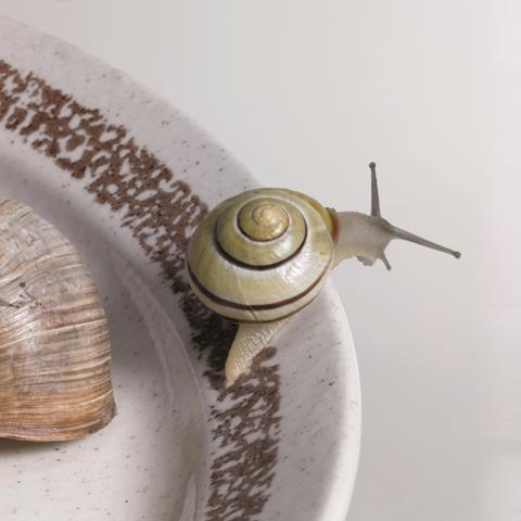 Snail escaping from a plate